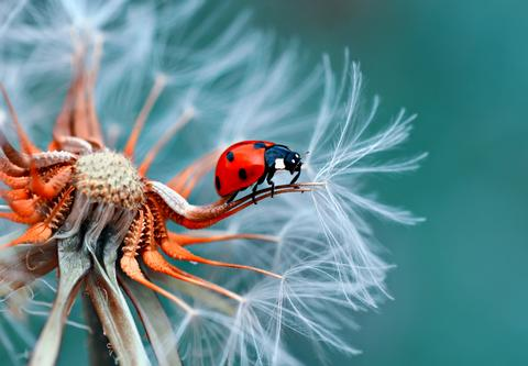 Hypnotherapist  Borve, Isle of Lewis. Pain and weight management, ptsd, stress, anxiety, habit change, phobias. Lady bug.